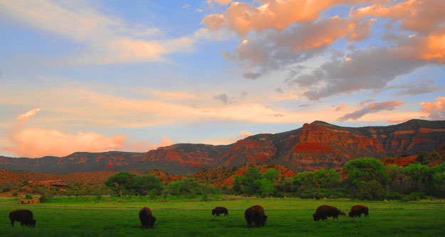 West-creek-bison-at-sunset